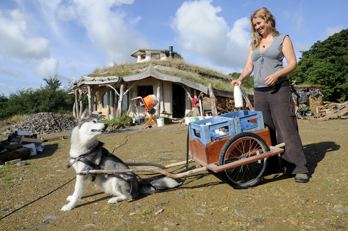Husky Drawn Cart Lammas Ecovillage Bright Green Futures